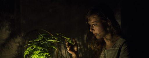 Planten die licht op wekken